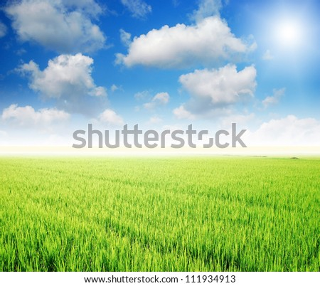 Nature grass field rice background outdoor for design