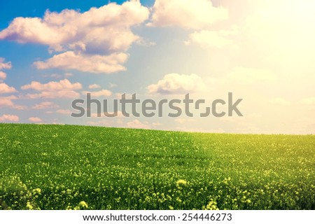 Nature. Green field and blue sunny sky at summer. Summer conceptual image.