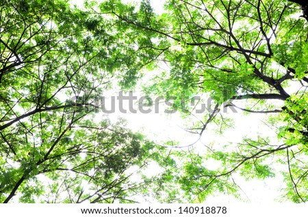 nature green leaves - stock photo