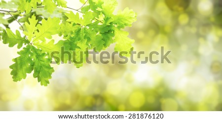 Nature green summer background with oak branch - stock photo