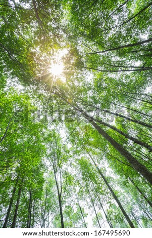 nature green wood forest trees with sunlight backgrounds. - stock photo