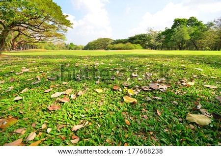 Nature in City Park - stock photo