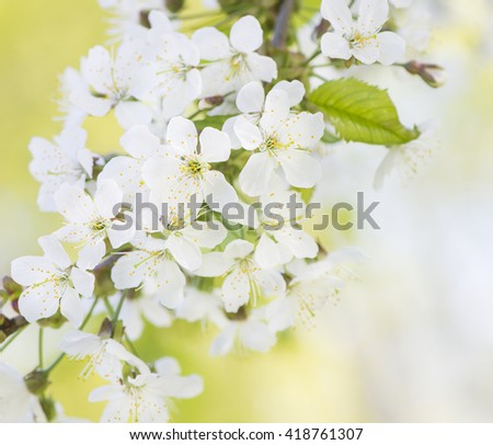 Nature in spring. Flowering tree in springtime. Close up of nature detail. Vibrant colorful natural background. Concept of new life, wonders of nature, growth and vitality.