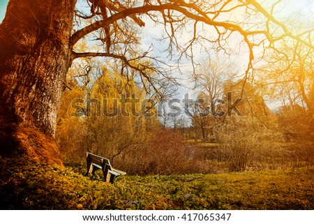 Nature in the old park at autumn. Lonely bench in the wilderness. Fantasy and dream concept.