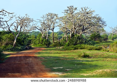 Nature in the rainforest on the island of Sri Lanka - stock photo