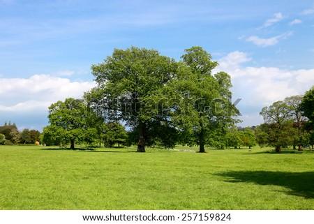 Nature, Landscape - stock photo