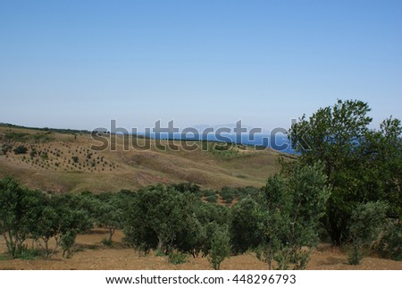 Nature landscape. Olive trees farm field. Summer sky. Olea europaea.