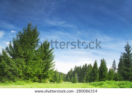 Nature Landscape with Fir Tree Forest,Green Vegetation, Meadows and Bright Blue Sky, Beautiful Rural Scene - stock photo