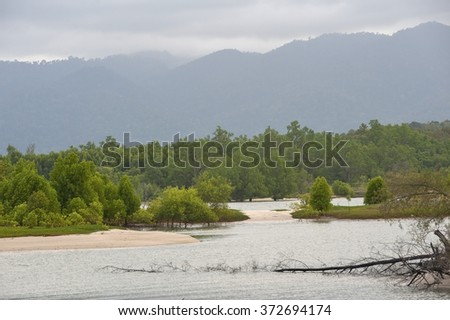Nature Langkawi island (Malaysia). A view of the mangroves foggy morning. - stock photo