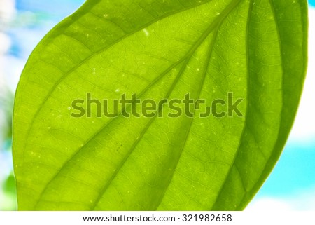 Nature leaf green texture / nature background.