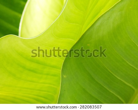 nature,leaves background, leaves pattern, leaves texture,  nature texture
