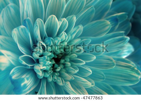 nature macro, blue flower - stock photo