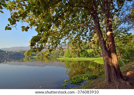 Nature of forest in Chiang Mai Thailand - stock photo
