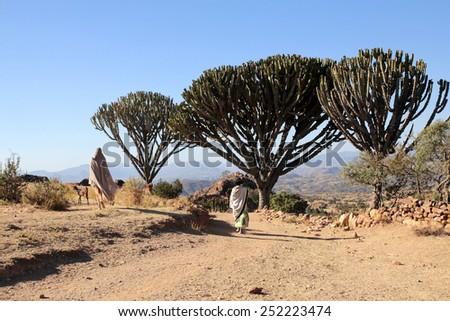Nature of Lalibela Ethiopia - stock photo