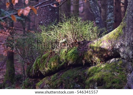 nature of primeval forest in Bavarian nature reserve in Germany