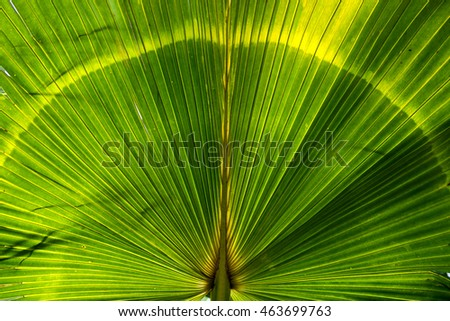 Nature of texture green palm leaf