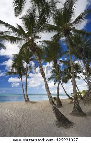 Nature of the Caribbean coast. Sea, sand, sky, palm trees and beach. Fine rest in tropics.