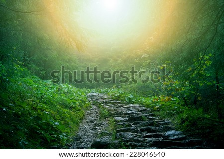 Nature. Path in dark green old forest.