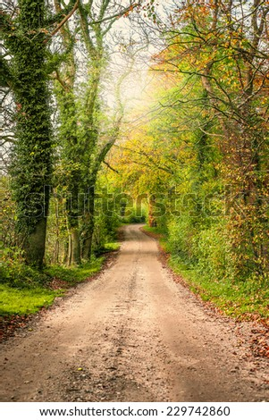 Nature path surrounded by trees and bush - stock photo