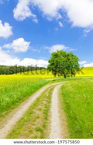 Nature path to the field near lake Bodensee - stock photo