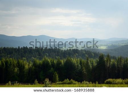 nature pine forest in day weather - stock photo
