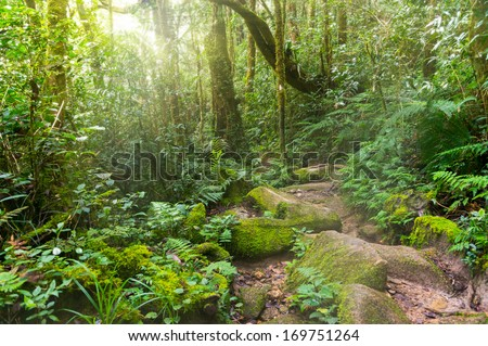 Nature rain forest with morning sunlight at Kinabalu Park,Malaysia,Asia  - stock photo