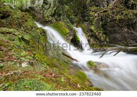 Nature's detour - stock photo