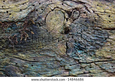 Nature's Graffiti: close up of decaying wood, which once had several layers of paint on it.