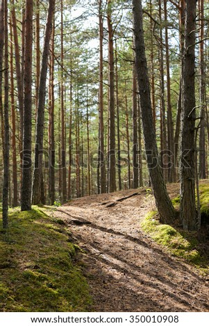 nature, season and environment concept - summer pine forest and path