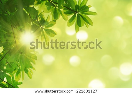 nature spring background