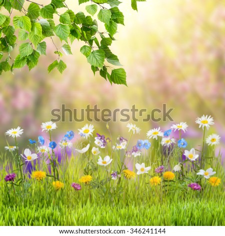 Nature spring background with wild flowers and branches