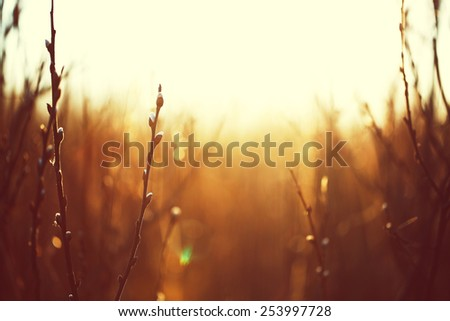nature spring vintage background - stock photo