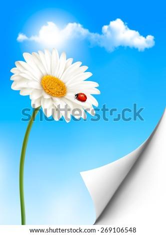Nature summer background with daisy flower with ladybug.  - stock photo