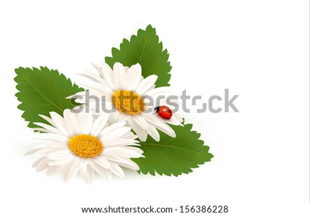 Nature summer daisy flower with ladybug. Raster version of vector. - stock photo
