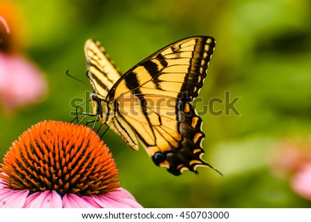 Nature summer flowers with butterfly in the garden / Selective focus