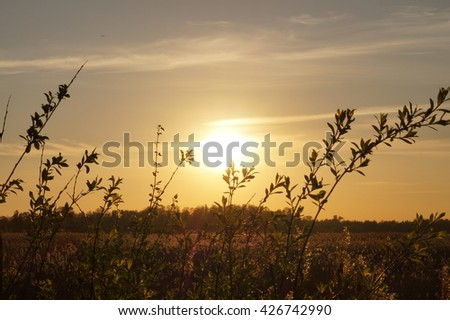 Nature sunset landscape view with the field of plants