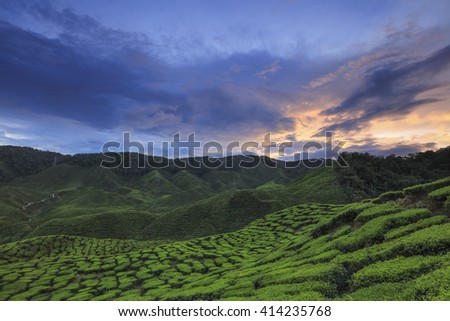 Nature tea plantation view near the mountain with beautiful sunset at Cameron Highlands, Malaysia. Image contain grain, noise and soft focus due nature composition. - stock photo
