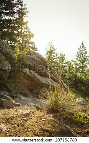 Nature Trail in Colorado. - stock photo