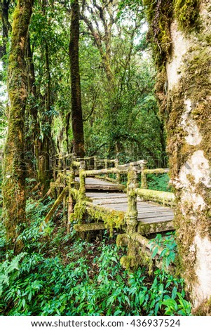 Nature Trail in Doi Inthanon National Park, Thailand