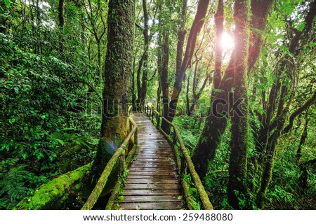 Nature Trail in forest. - stock photo