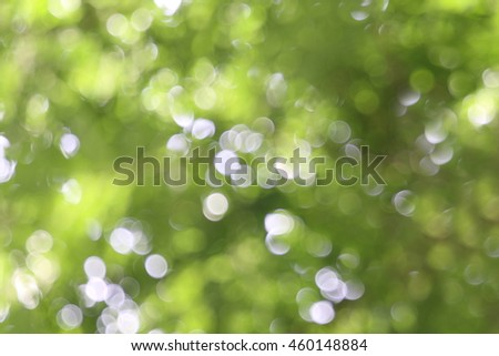 nature tree background bokeh light green apstract