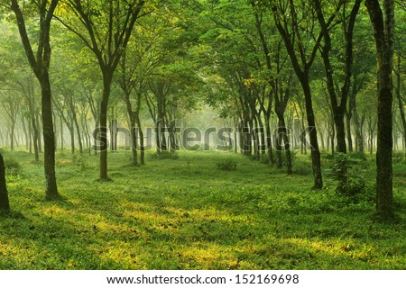 nature,tree,flower and landscape - stock photo