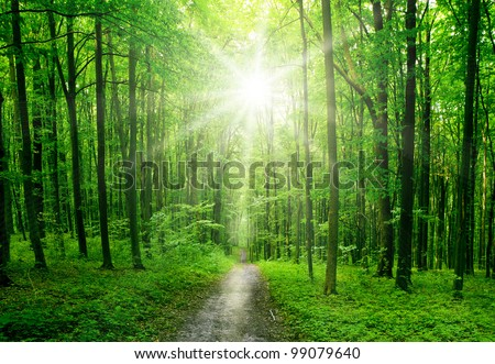 nature tree . pathway in the forest with sunlight backgrounds. - stock photo