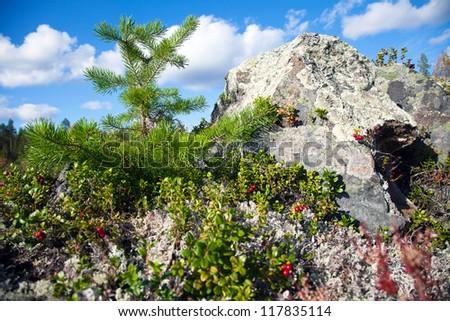 nature view - stock photo