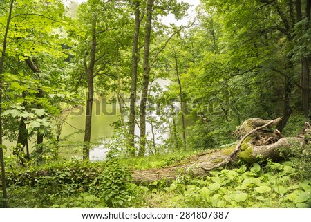 Nature view in forest