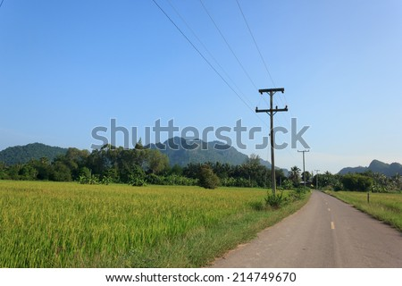 Nature view, Road with the rice farm in countryside of Thailand.