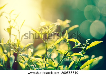 nature vintage. leaves with sunset background. - stock photo