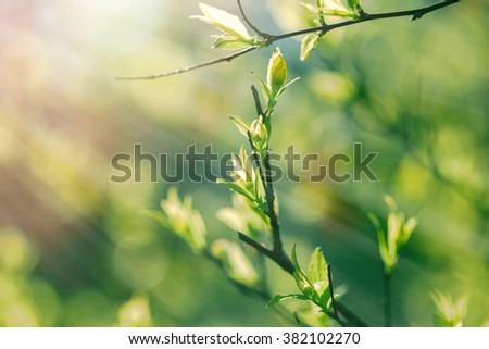 Nature wakes up - spring leaves in the forest - stock photo