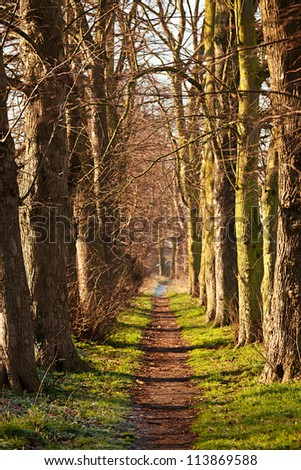 Nature walk tunnel - stock photo