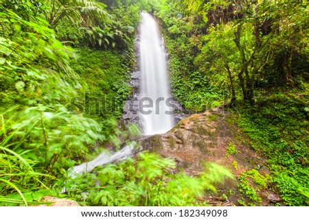 Nature waterfall with green plants deep in the jungle HDR
